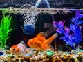 Aquários e Peixes Ornamentais