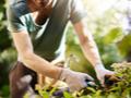Jardineiros e Piscineiros