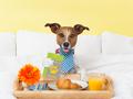 Hotéis e Spas p/ Animais