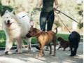 Passeador e Cuidador de Cães